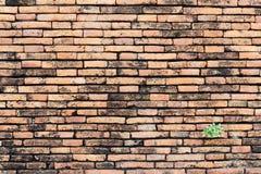 Alte Backsteinmauer, unterschiedliches sortiert und rot, Orange und Gelb machen i Stockfotografie