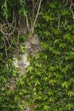 Alte Backsteinmauerbeschaffenheit mit Anlage Lizenzfreie Stockfotografie