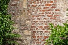 Alte Backsteinmauerbeschaffenheit mit Anlage Stockbild