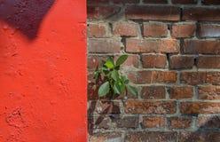 alte Backsteinmauerbeschaffenheit mit Grünpflanze, Stockfotografie