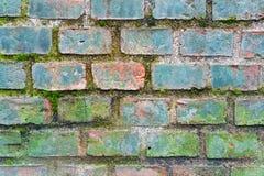 Alte Backsteinmauerbeschaffenheit mit Moos Stockbilder