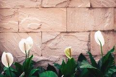 Alte Backsteinmauerhintergrundbeschaffenheit dekorativ mit weißer Blume O Stockfotos
