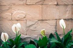 Alte Backsteinmauerhintergrundbeschaffenheit dekorativ mit weißer Blume O Lizenzfreies Stockfoto