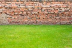 Alte Backsteinmauern Beschaffenheit und Grasgrün für Hintergrund Stockbilder