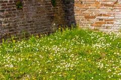 Alte Backsteinmauern und grünes Gras Lizenzfreie Stockbilder