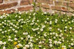 Alte Backsteinmauern und grünes Gras Lizenzfreies Stockfoto