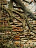 Alte Backsteinmauerwurzeln Lizenzfreies Stockbild
