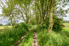 Alte Bahn zwischen Bäumen und Feldern Stockbilder