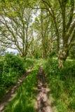 Alte Bahn zwischen Bäumen und Feldern Lizenzfreies Stockfoto