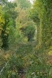 Alte Bahnlinie Bahnlinie wird mit Gras und kleinen Büschen überwältigt Tunnel der Liebe - wunderbarer Ort von Natur aus geschaffe Stockfotografie