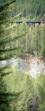 Alte Bahnstrecken in den Kiefern nähern sich Glacier Nationalpark Stockfotografie