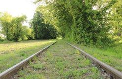 Alte Bahnstrecken in der Mitte des Waldes Stockfotografie