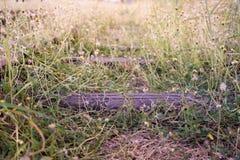 Alte Bahnstrecken mit Gras und Sonnenschein Lizenzfreie Stockbilder