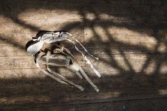Alte Ballettschuhe auf altem Bretterboden Lizenzfreie Stockfotos