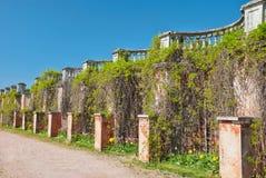 Alte Balustrade abgedeckt mit Reben im peterhof Lizenzfreie Stockfotos