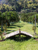 Alte Bambusbrücke Stockfotografie