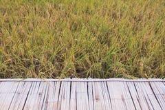 Alte Bambussänfte auf dem Reisgebiet Lizenzfreie Stockfotos