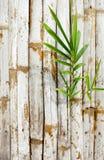 Alte Bambuswand mit grünen Blättern Stockfotografie