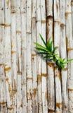 Alte Bambuswand mit grünen Blättern Stockfoto