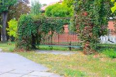 Alte Bank im Herbstpark verziert mit wilden Trauben Stockfotos