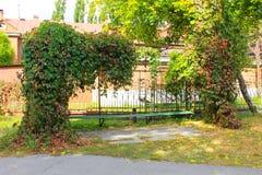Alte Bank im Herbstpark verziert mit wilden Trauben Stockfoto