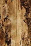 Alte Barke der Baumbeschaffenheit Lizenzfreies Stockfoto