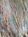 Alte Barke eines Baums Lizenzfreies Stockfoto