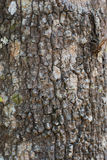 Alte Barke hölzernes Baum-Beschaffenheits-Hintergrund-Muster Lizenzfreie Stockbilder