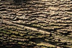 Alte Barke mit Moos Stockbilder
