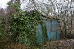Alte Bauholz-Hütte überwältigt im Efeu, Prag, Tschechische Republik, Europa Stockfotografie