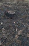 Alte Baum-Stümpfe verursacht durch Abholzung und Brand Stockfoto