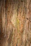 Alte Baum-Stamm-Barken-rauer Hintergrund Lizenzfreie Stockfotos
