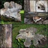 Alte Baum-Stamm-gesetzte Collage Lizenzfreie Stockfotografie