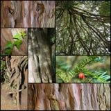 Alte Baum-Stamm-gesetzte Collage Stockfoto