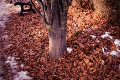 Alte Baum- und Braunblätter Lizenzfreie Stockfotografie