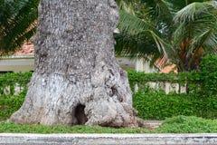 Alte Baum- und Grünblätter Lizenzfreie Stockfotografie