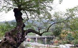 Alte Baumaste und Brücke auf Fluss Lizenzfreie Stockbilder
