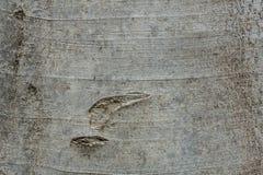 Alte Baumbarke Stockfoto