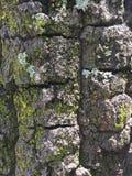 Alte Baumbarke Stockbilder