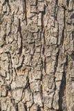 Alte Baumbarke Stockbild