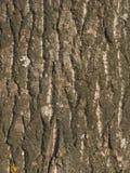 Alte Baumbarkebeschaffenheit Stockbild