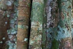 Alte Baumbeschaffenheit Stockbild