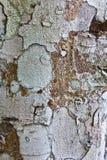 Alte Baumbeschaffenheit Stockbilder