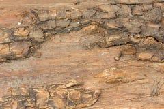 Alte Baumbeschaffenheit Lizenzfreies Stockbild