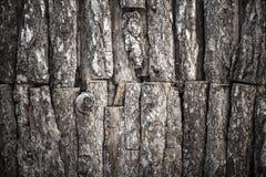 Alte Baumbeschaffenheit Stockfoto