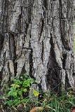 Alte Baumbeschaffenheit mit frischen Grünpflanzen Lizenzfreie Stockbilder