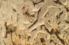 Alte Baumbeschaffenheit mit Mustern Stockfotos