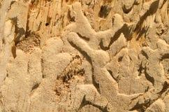 Alte Baumbeschaffenheit mit Mustern Stockbilder