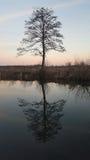 Alte Baumflussreflexion bei Sonnenuntergang Lizenzfreie Stockfotos