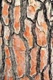 Alte Baumhaut der Barke Stockbild